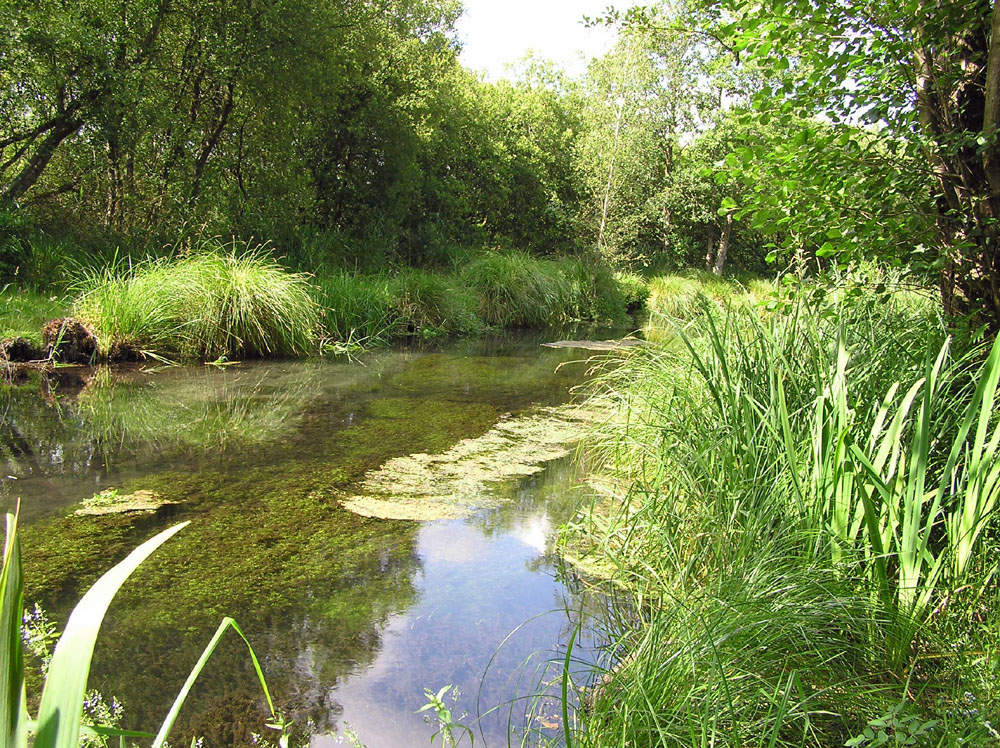 Sites searched included the chalk spring fens of Hampshire - here at Greywell Moors